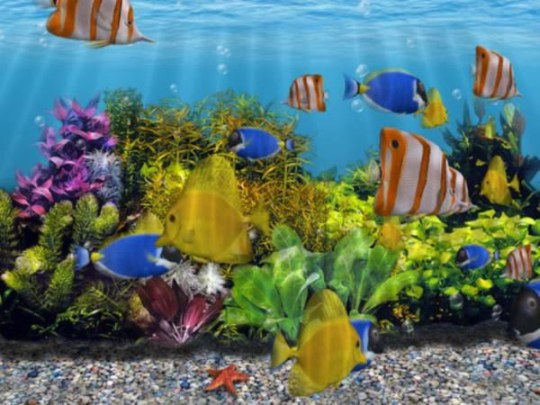 Cài đặt 3D Fish School Screensaver 4.91