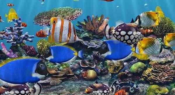 3D Fish school